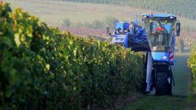Máquina de la cosecha de la uva - viñedo de Burdeos almacen de metraje de vídeo