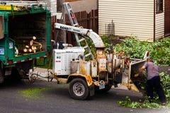 Máquina de la trituradora del árbol en la acción y trabajadores que empujan las ramas internacional Fotografía de archivo