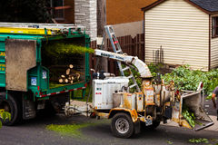 Máquina de la trituradora del árbol en la acción y trabajadores que empujan las ramas internacional Foto de archivo libre de regalías