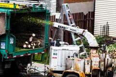 Máquina de la trituradora del árbol en la acción y trabajadores que empujan las ramas internacional Imagenes de archivo