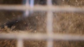 Máquina de pulir que machaca finalmente el grano grueso marrón a través de enrejado del metal en la cámara lenta metrajes