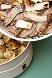 Máquina de secagem do cogumelo Foto de Stock Royalty Free