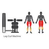 Máquina del rizo de pierna del gimnasio libre illustration