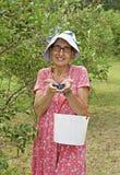 Máquina desbastadora da uva-do-monte Fotografia de Stock Royalty Free