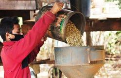Máquina hulling do café Fotos de Stock