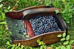 Máquina para recolher uvas-do-monte Imagem de Stock