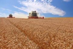 Máquina segador del trigo en la acción Fotos de archivo