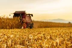 Máquina segador que trabaja en fondo en campo de maíz Imagen de archivo