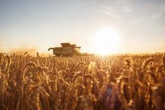 Máquina segadora en el campo en la puesta del sol Foto de archivo libre de regalías