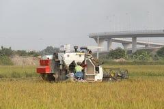 Máquina segadora en el campo que cosecha el arroz Imagen de archivo