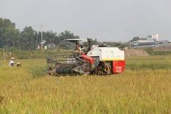 Máquina segadora en el campo que cosecha el arroz Imagenes de archivo
