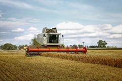 Máquina segadora en el maíz Fotografía de archivo libre de regalías