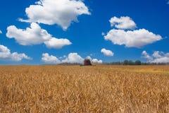 Máquina segadora en un campo de trigo Imagen de archivo