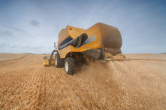 Máquina segadora moderna en una cosecha del campo de trigo Imágenes de archivo libres de regalías