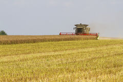 Máquina segadora que cosecha la violación de la semilla oleaginosa Imagen de archivo libre de regalías