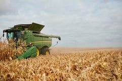 Máquina segadora que cosecha maíz fotos de archivo