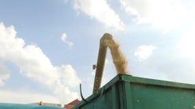 Máquina segadora que descarga el grano en un carro Grano de la máquina segadora almacen de video