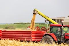 Máquina segadora que descarga granos del trigo en el tractor remolque Imágenes de archivo libres de regalías