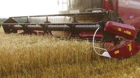 Máquina segadora Trigo que cosecha los esquiladores El trigo está cosechando Cosecha del tiro del steadicam de la agricultura del almacen de video