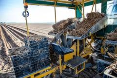 Máquinas de la agricultura en campo del espárrago Foto de archivo libre de regalías