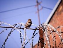 Más allá de los límites Fotografía de archivo