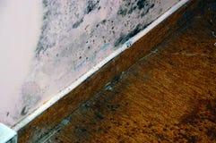Más molde del apartamento Fotografía de archivo libre de regalías