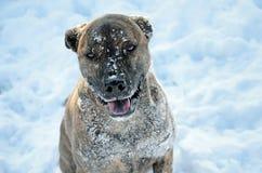 Más nieve por favor Imagen de archivo libre de regalías
