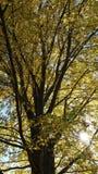 Máscara da árvore Imagens de Stock Royalty Free