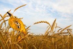 Máscara do carnaval no trigo Imagem de Stock