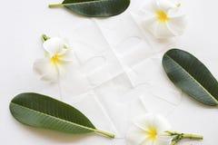 Máscara natural de la hoja para la cara de la piel de las flores herbarias Fotografía de archivo libre de regalías