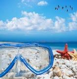 Máscara y estrellas de mar que se zambullen bajo multitud de flamencos Fotografía de archivo libre de regalías