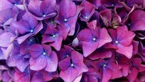 Máscaras das flores violetas Imagens de Stock