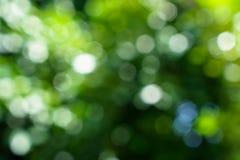 Máscaras das folhas naturais defocused do verde e do bokeh b da luz branca Foto de Stock Royalty Free