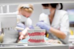 Mâchoire artificielle dans le bureau dentaire photographie stock libre de droits