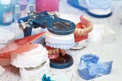 Mâchoire avec des dents sur le fond du laboratoire image libre de droits