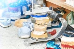 Mâchoire avec des dents sur le fond du laboratoire images stock