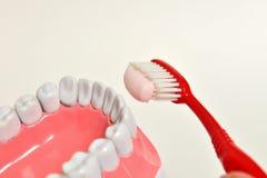 Mâchoire et brosse à dents, concept de soins dentaires Image libre de droits