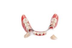 Mâchoire fausse avec deux dents à l'extérieur Image stock