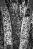 Mâchoire inférieure de zèbre de montagne image libre de droits