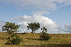 Mâchoires dans les dunes photographie stock libre de droits