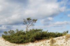 Mâchoires dans les dunes photographie stock