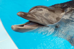 Mâchoires de dauphin Photographie stock libre de droits