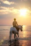Mâle conduisant un cheval sur le fond de la mer Photographie stock libre de droits