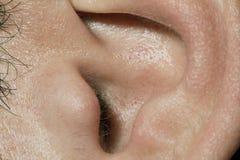 Mâle de canal d'oreille Images stock