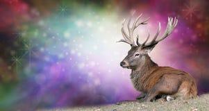 Mâle de Noël sur un fond de fête Images stock