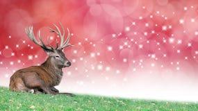 Mâle de Noël sur un fond rouge de fête de bokeh Photographie stock