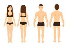 Mâle et corps féminin illustration stock
