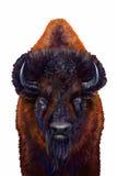 Mâle sauvage de bison Photographie stock libre de droits