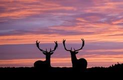 Mâles au coucher du soleil Images stock