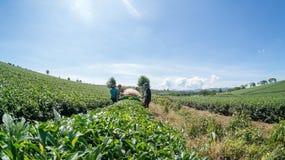 3 mâles ont coupé le thé Photos libres de droits